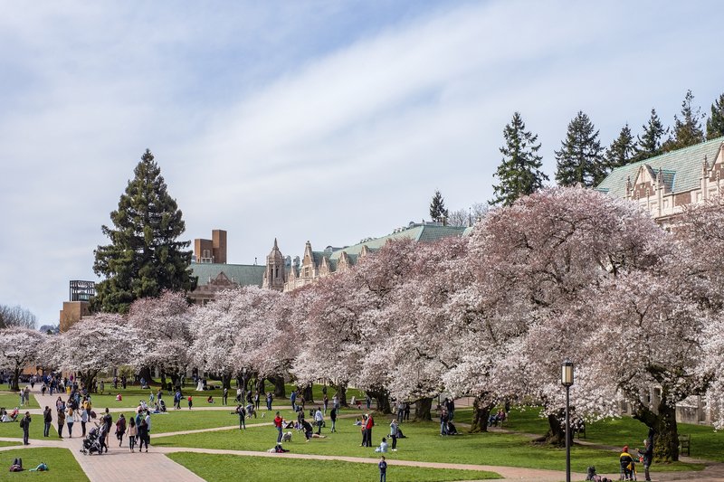 Check Out Awesome Cherry Blossoms