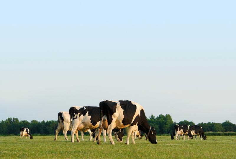 Milk The Milk District