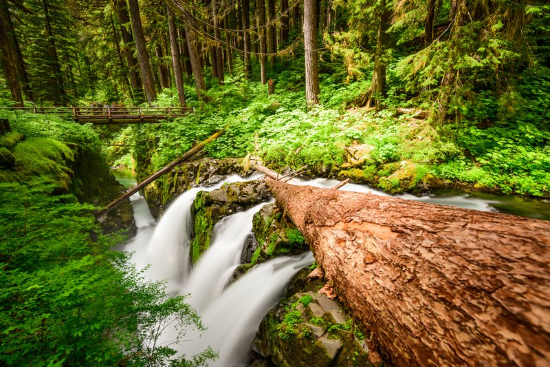 Day Trip to Olympic National Park