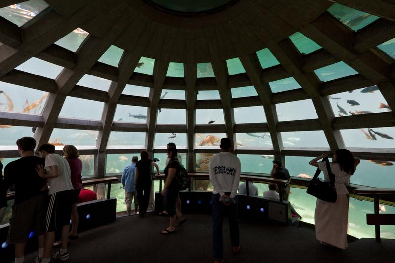 Explore the wonders of the underwater world at Seattle Aquarium
